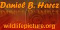 Wildlife picture - természetfotók, tájfotók és fényképes ajándéktárgyak Harcz Balázs természetfotóstól.